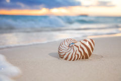 Nautilus shell on sea beach , sunrise. shallow dof Royalty Free Stock Photos