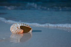 Nautilus shell in the sea in the night Royalty Free Stock Image