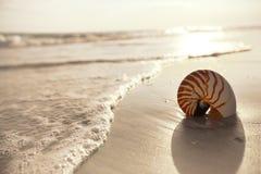 Nautilus shell on a sea ocean beach sand Stock Photo