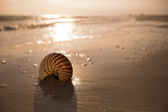 Nautilus shell on a sea ocean beach sand with  dark sunset light Royalty Free Stock Photos