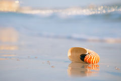 Nautilus shell on a sea ocean beach sand with golden waves and r. Eflection Royalty Free Stock Photo
