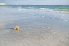 Nautilus shell on a sea ocean beach sand with nice curve lens di Stock Photography