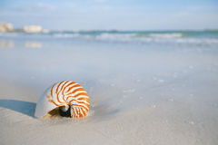 Nautilus shell on a sea ocean beach sand with nice curve lens di Royalty Free Stock Photos