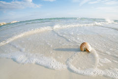 Nautilus shell on a sea ocean beach sand Royalty Free Stock Images