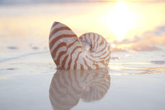 Nautilus shell in the sea , sunrise Royalty Free Stock Photography