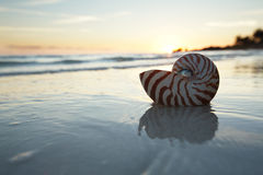 Nautilus shell in the sea , sunrise Stock Photography