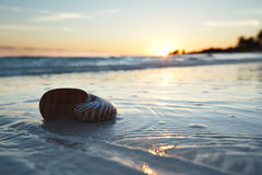 Nautilus shell in the sea , sunrise Stock Photos