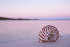 Nautilus shell in the sea , sunrise, dark pink light royalty free stock photos
