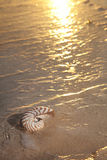 Nautilus shell in the sea , sunset.very warm Stock Photos