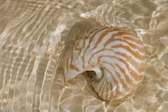 Nautilus shell in the sea water Royalty Free Stock Images