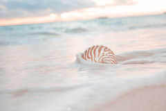 Nautilus shell in the sea wave Stock Photo