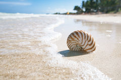 Nautilus shell  in sea wave on a beach. Nautilus shell  in blue sea wave, shallow dof Royalty Free Stock Photo