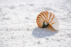 Nautilus shell with sea wave, Florida beach under the sun ligh stock images