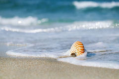 Nautilus shell with sea wave, Florida beach under the sun ligh stock image