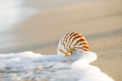 Nautilus shell with sea wave,  Florida beach  under the sun ligh Stock Photos