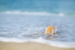 Nautilus shell with sea wave,  Florida beach  under the sun ligh Stock Photo
