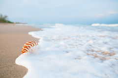 Nautilus shell with sea wave,  Florida beach  under the sun ligh Royalty Free Stock Photos