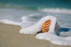 Nautilus shell with sea wave,  Florida beach  under the sun ligh Royalty Free Stock Photos