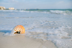 Nautilus shell with sea wave,  Florida beach  under the sun ligh Royalty Free Stock Image