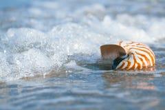 Nautilus shell with sea wave,  Florida beach Stock Photo