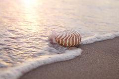 Nautilus shell in the sea wave and sunrise Royalty Free Stock Photography