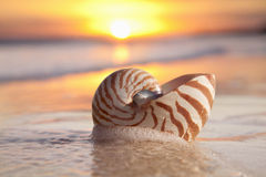 Nautilus shell in the sea wave sunrise, warm light Stock Images