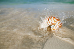 Nautilus shell sea waves, live action Stock Photography