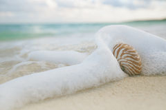 Nautilus shell in sea waves, live action Royalty Free Stock Photos