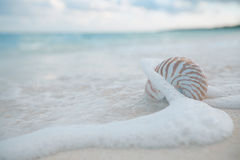 Nautilus shell in sea waves, live action Stock Image
