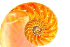 Nautilus shell section. Against white Stock Image