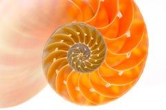 Nautilus shell section. Isolated on white background Stock Image