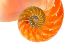 Nautilus shell section Royalty Free Stock Images