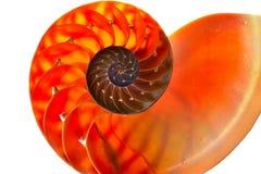 Nautilus shell section Stock Photo