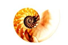 Nautilus shell section against white Stock Photos