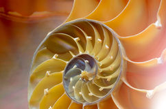 Nautilus shell section Stock Images