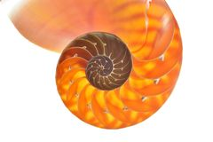 Nautilus shell section Stock Photography