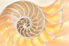 Nautilus shell section pattern background Stock Image