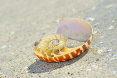 Nautilus shell section Royalty Free Stock Photo