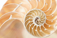 Nautilus shell section texture background Royalty Free Stock Images