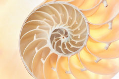 Nautilus shell section texture background Stock Photos