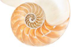 Nautilus shell section on white, cut out Royalty Free Stock Photos