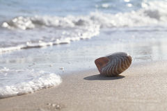 Nautilus shell silhouette backlit on sea beach Stock Photo