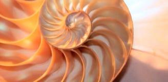 Nautilus shell stock Fibonacci lengte videoclip die golden ratio number sequentie natuurlijke achtergrond halve plak sectie verand stock videobeelden