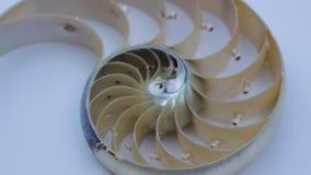 Nautilus shell stock Fibonacci lengte videoclip die golden ratio number sequentie natuurlijke achtergrond halve plak sectie verand stock footage