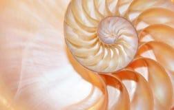 Nautilus shell stock Fibonacci lengte videoclip die golden ratio number sequentie natuurlijke achtergrond halve plak sectie veran stock videobeelden