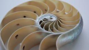 Nautilus shell stock Fibonacci lengte videoclip die golden ratio number sequentie natuurlijke achtergrond halve plak sectie veran stock footage