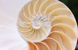 Nautilus shell stock footage video clip turning fibonacci golden ratio natural background. Nautilus shell stock footage video clip turning golden ratio Fibonacci stock video