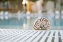 Nautilus shell at swimming pool edge Royalty Free Stock Image
