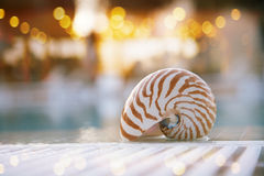 Nautilus shell at swimming pool edge Royalty Free Stock Photos
