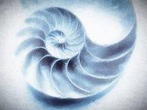 Nautilus Shell Textured Images libres de droits